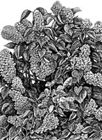 Winter Morning, Albion
