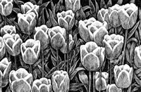 Aerial View of Albion, 1993